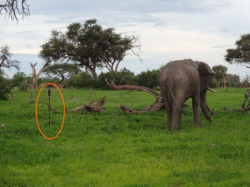 Elefant bein Dreh des 360Grad Safarifilms