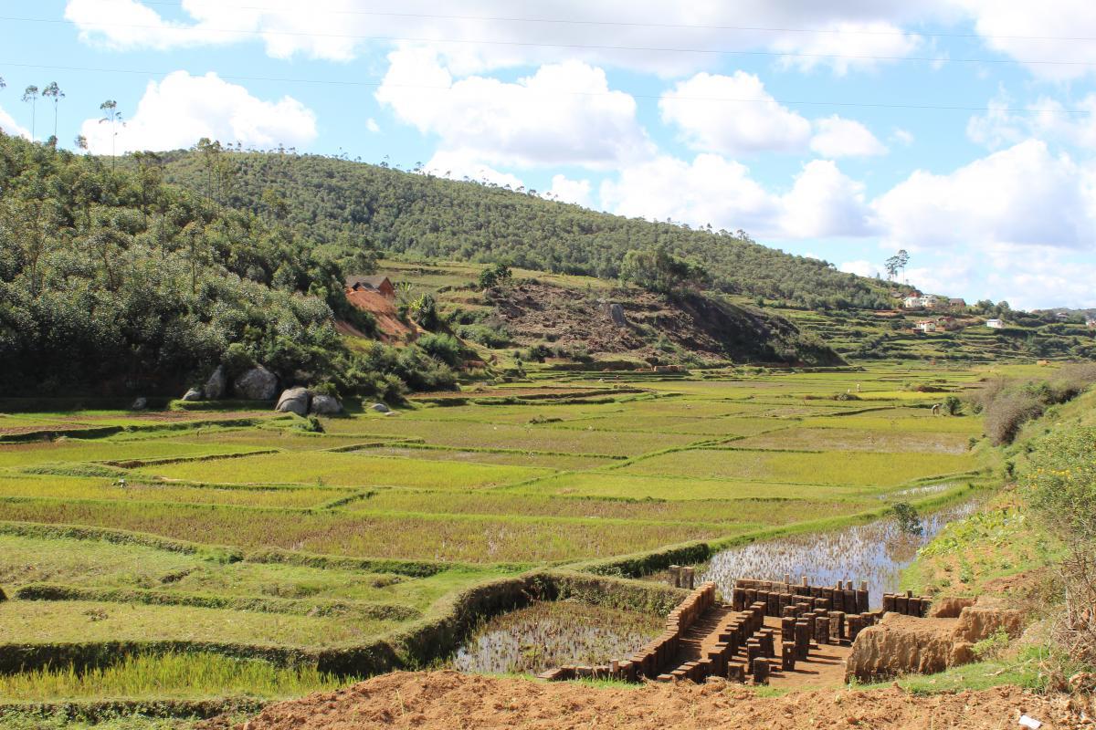 Reisfelder auf Madagaskar - Reisen mit afrika tours individuell