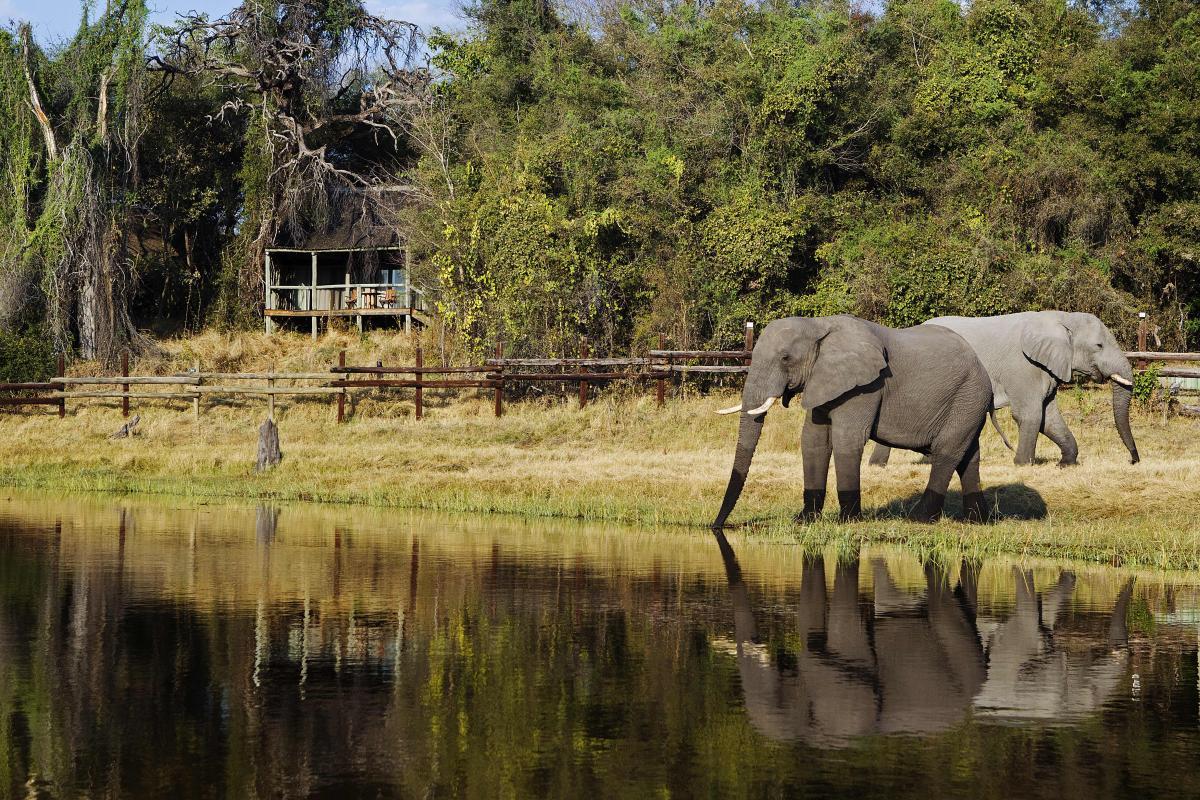 Elefanten am Wasserloch vor einer Lodge in Botswana mit schöner Wasserspiegelung und Hütten im Hintergrund in Abendstimmung