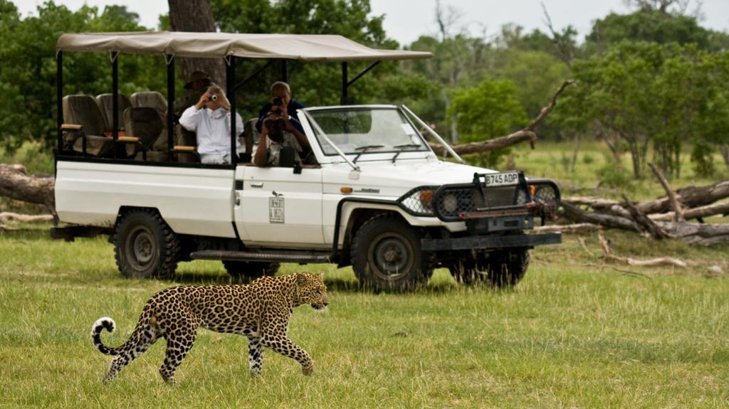 Leopard vor einem Safari-Fahrzeug, weißer 4x4 Jeep Cabrio