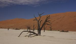 Genießen Sie den beeindruckenden Anblick des Dead Vlei mit zahlreichen toten Akazienbäumen in der Namib Wüste