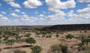 Genießen Sie die herrliche Landschaft im Tarangire National Park in Tanzania