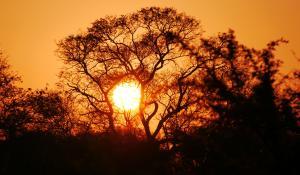 Genießen Sie wunderschöne Sonnenuntergänge in der Savanne des Krüger National Parks in Südafrika