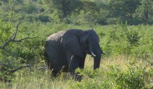 Erleben Sie die weltweit höchste Elefantendichte im Addo Elephant National Park in Südafrika