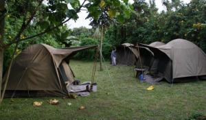 Erleben Sie Uganda naturnah und authentisch bei einer Campingsafari