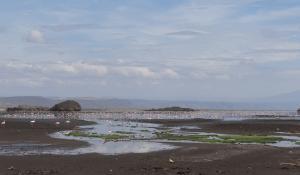 Beobachten Sie die eindrucksvollen Flamingo-Kolonien am Lake Natron in Tanzania