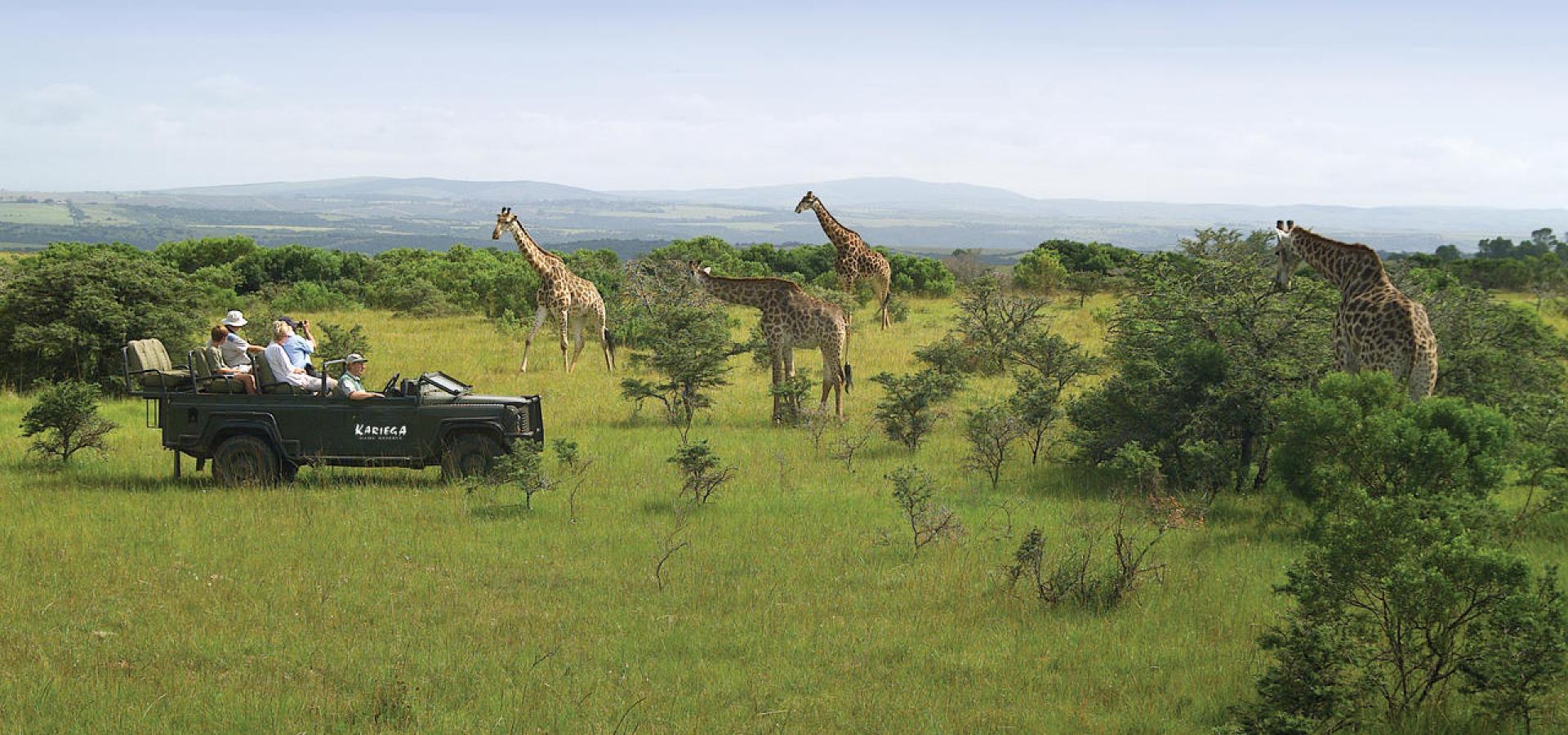Giraffen hautnah auf Game Drive im Kariega Game Reserve