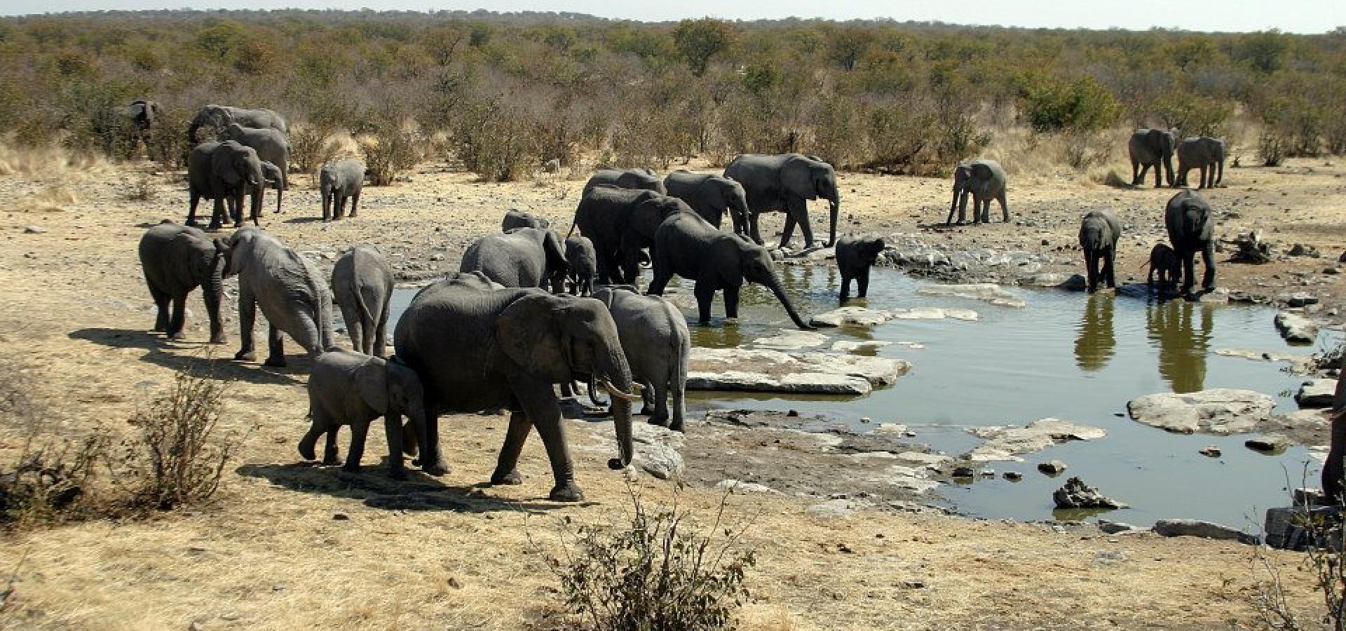 Lassen Sie sich faszinieren von riesigen Elefantenherden im Etoscha National Park in Namibia