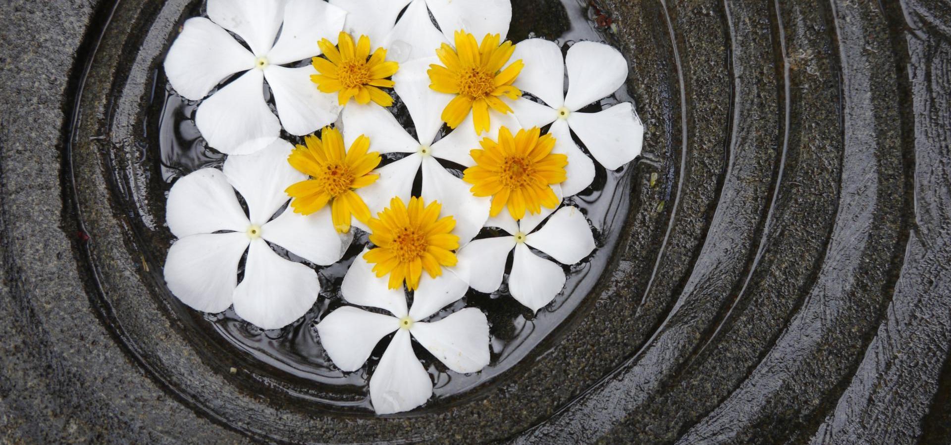 Blütenzauber Mauritius