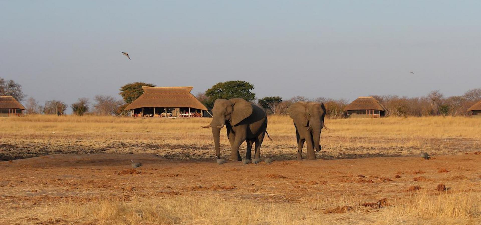 Camp Hwange - Elefanten vor dem Camp
