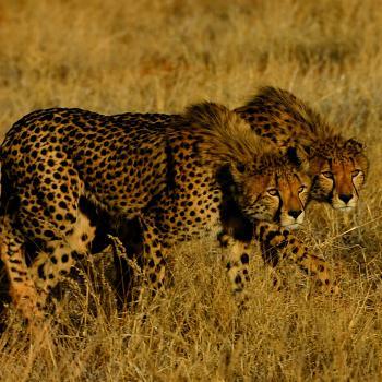Rundreise vom Kap zu den Buschmännern der Kalahari