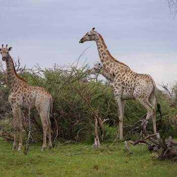 Mobile Zelt- und Lodge-Safari zu den Highlights Botswana