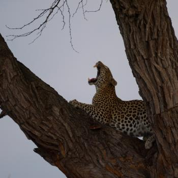 Ultimative Flugsafari zu Botswanas Tierreservaten