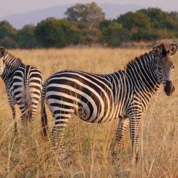 Interessante Flugsafari durch Zambia und nach Malawi