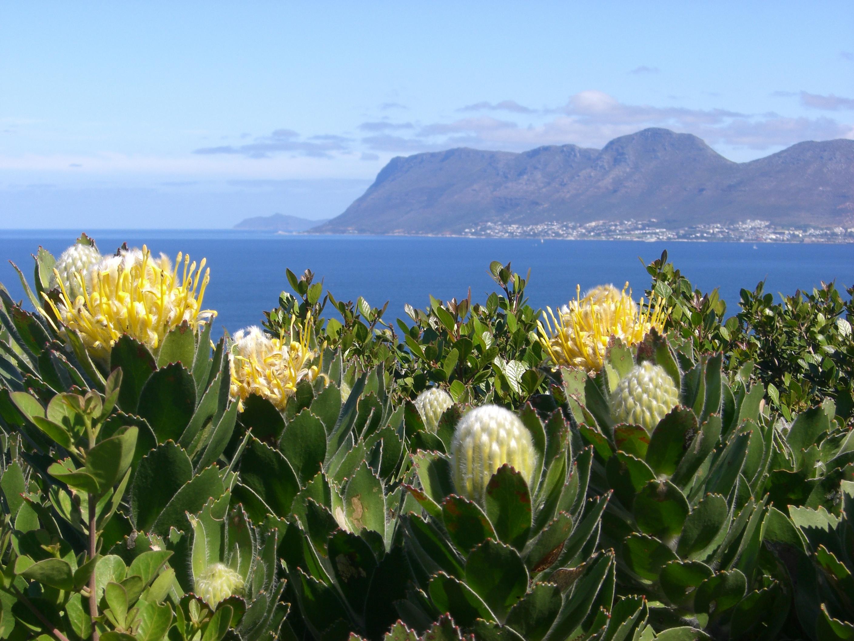 Blick auf Kapstadt the mother city in Südafrika