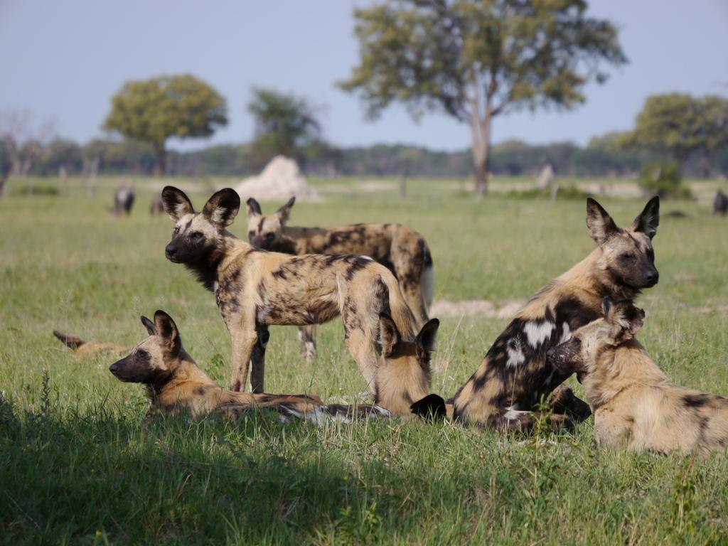 Afrikas beste Jäger sind sehr sozial