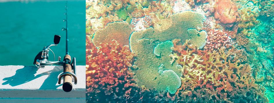 Mauritius ist von Korallenriffen umgeben