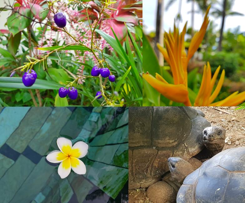 botanische Gärten und Riesenschildkröten auf Mauritius