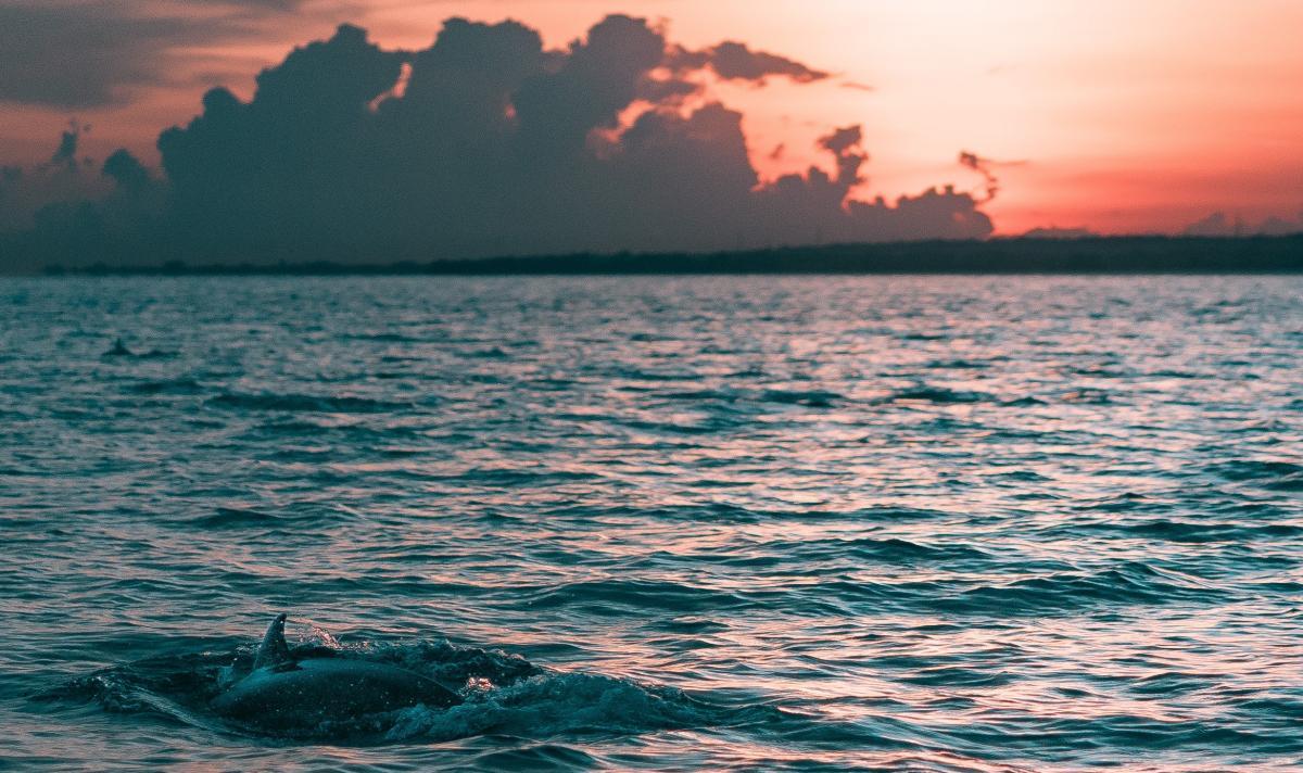 Delfine im Meer vor Mauritius