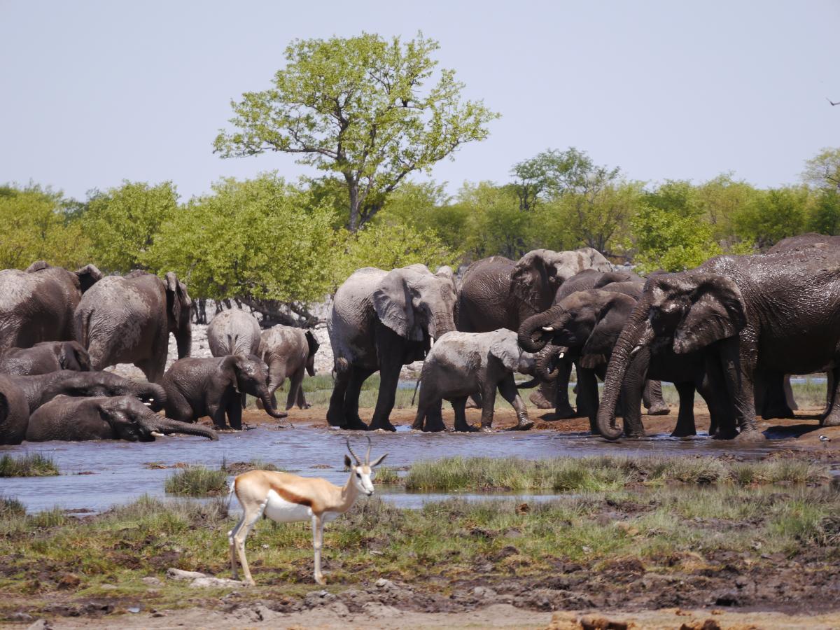 Tiere am Wasserloch in der Etoscha Pfanne in Namibia