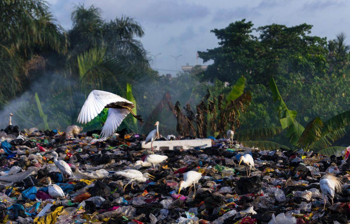 Plastiktüten sind ab November in Botswana verboten