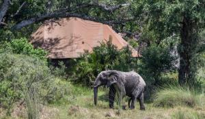 Camp Kanana Elefant