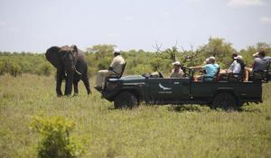 Ngala Lodge Safari Gamedrive