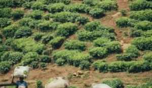 Feldarbeit in Uganda