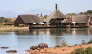 Buffelsdrift Lodge mit Nilpferd am Wasserloch