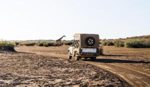Fahrt in Richtung Kalahari mit Giraffe