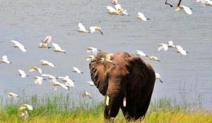 Elefant im Hwange Nationalpark Simbabwe