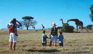 Erleben Sie die Eleganz der Giraffen hautnah auf einer Fußpirsch mit der ganzen Familie