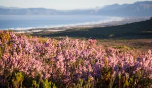 Grootbos Nature Reserve