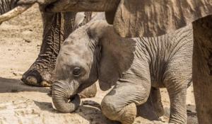 Elefanten Baby Etosha Nationalpark