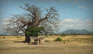 Das Majete Game Reserve in Malawi ist der Inbegriff von Wildnis und beherbergt eine unangetastete Flora und Fauna