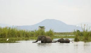 Die sumpfigen Auen des Liwonde National Parks sind ein Paradies für zahlreiche Wildtiere Malawis