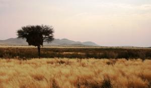 Lassen Sie sich von den schier endlos wirkenden Weiten der Namib Wüste faszinieren