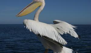 Unternehmen Sie optional eine Bootsfahrt in Swakopmund und beobachten Sie Robben, Pelikane und Delphine