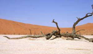 Genießen Sie den beeindruckenden Anblick der Ton-Pfanne Dead Vlei in der Namib Wüste