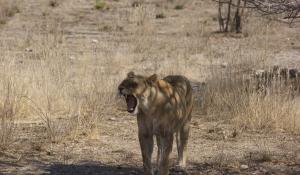 Machen Sie unvergessliche Safarierlebnisse im Etoscha National Park