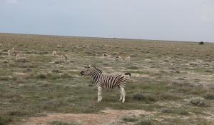 Der Etoscha National Park ist das größte Naturschutzgebiet Namibias und beherbergt eine atemberaubende Tierwelt
