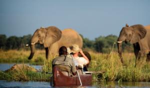 Kanu Safari im Lower Zambezi Nationalpark mit Elefanten