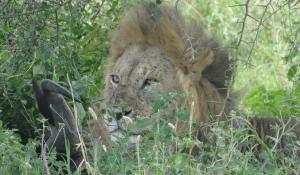 Erleben Sie die atemberaubende Tier- und Pflanzenwelt der Serengeti in Tanzania