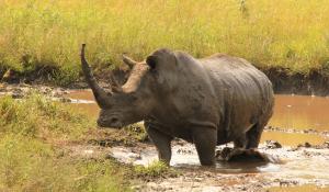 """Machen Sie auf einer geführten """"Walking Safari"""" im Balule Nature Reserve in Südafrika interessante Wildtiere ausfindig"""