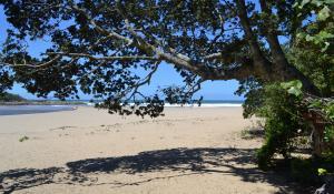 Die einmalige Wild Coast in Südafrika ist für ihre unberührte Natur und menschenleeren Sandstrände bekannt