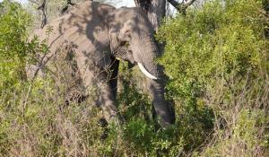 Beobachten Sie Elefanten hautnah im Krüger National Park in Südafrika