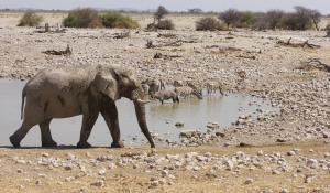 Im Etoscha National Park in Namibia gibt es viele Wasserlöcher, an denen sich häufig eine Vielzahl an Wildtieren beobachten lassen