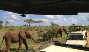 Machen Sie hautnahe Begegnungen mit majestätischen Elefanten im Tarangire National Park in Tanzania