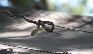 Im landschaftlich beeindruckenden South Luangwa National Park in Zambia können Sie aufregende Tierbeobachtungen machen