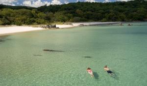 Gehen Sie schnorcheln im glasklaren Wasser des Lake Malawi, artenreichster See der Welt
